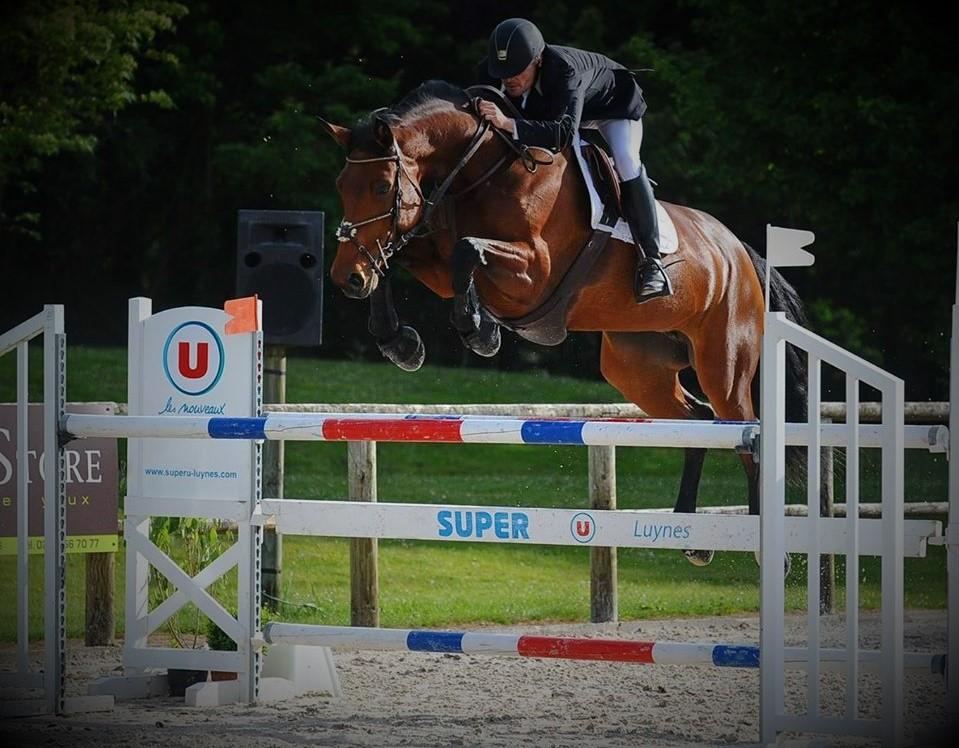Valorisation de chevaux en concours