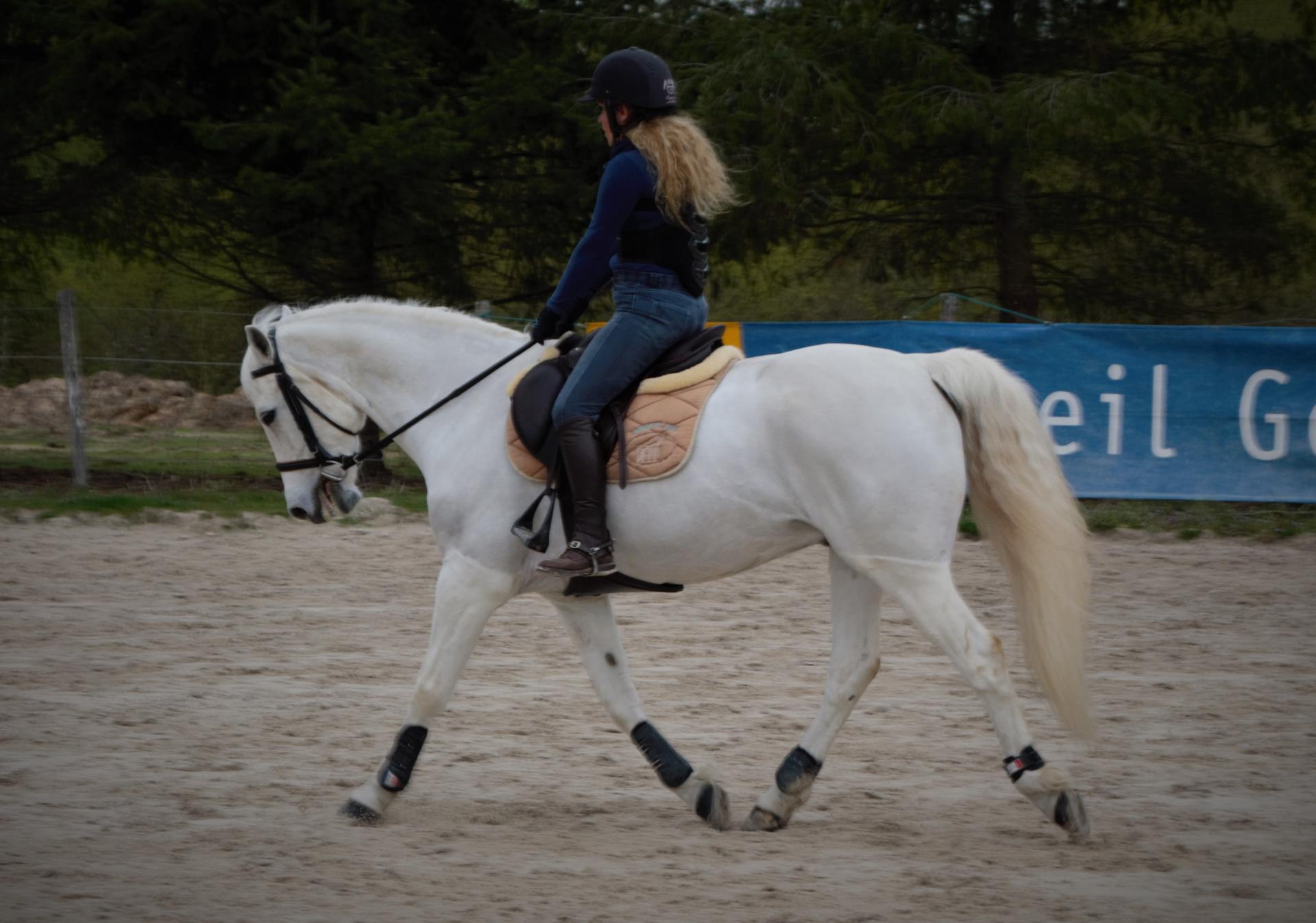 cours d'équitation en dressage à domicile