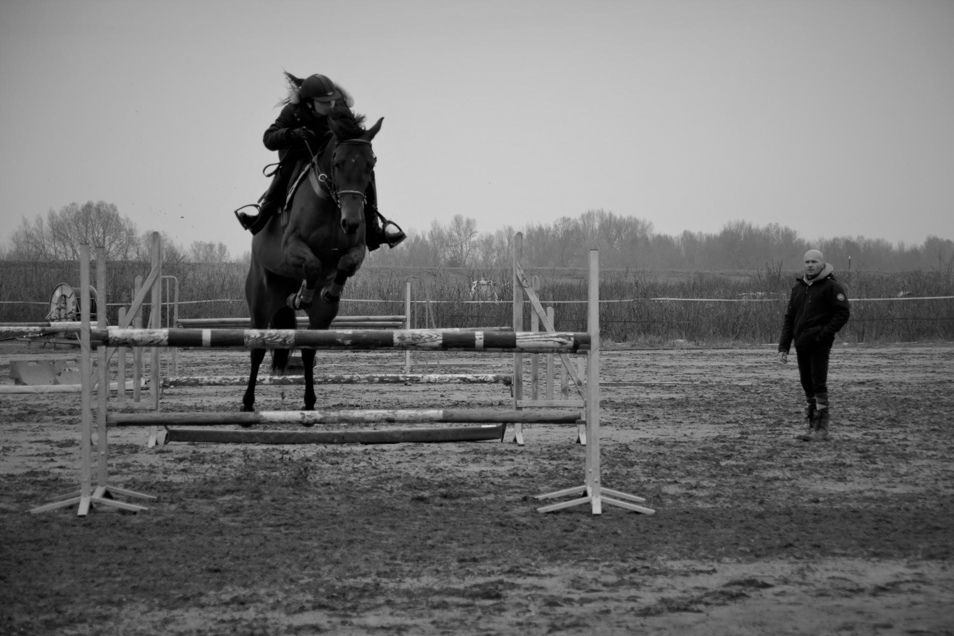 cours d'équitation Obstacle à domicile