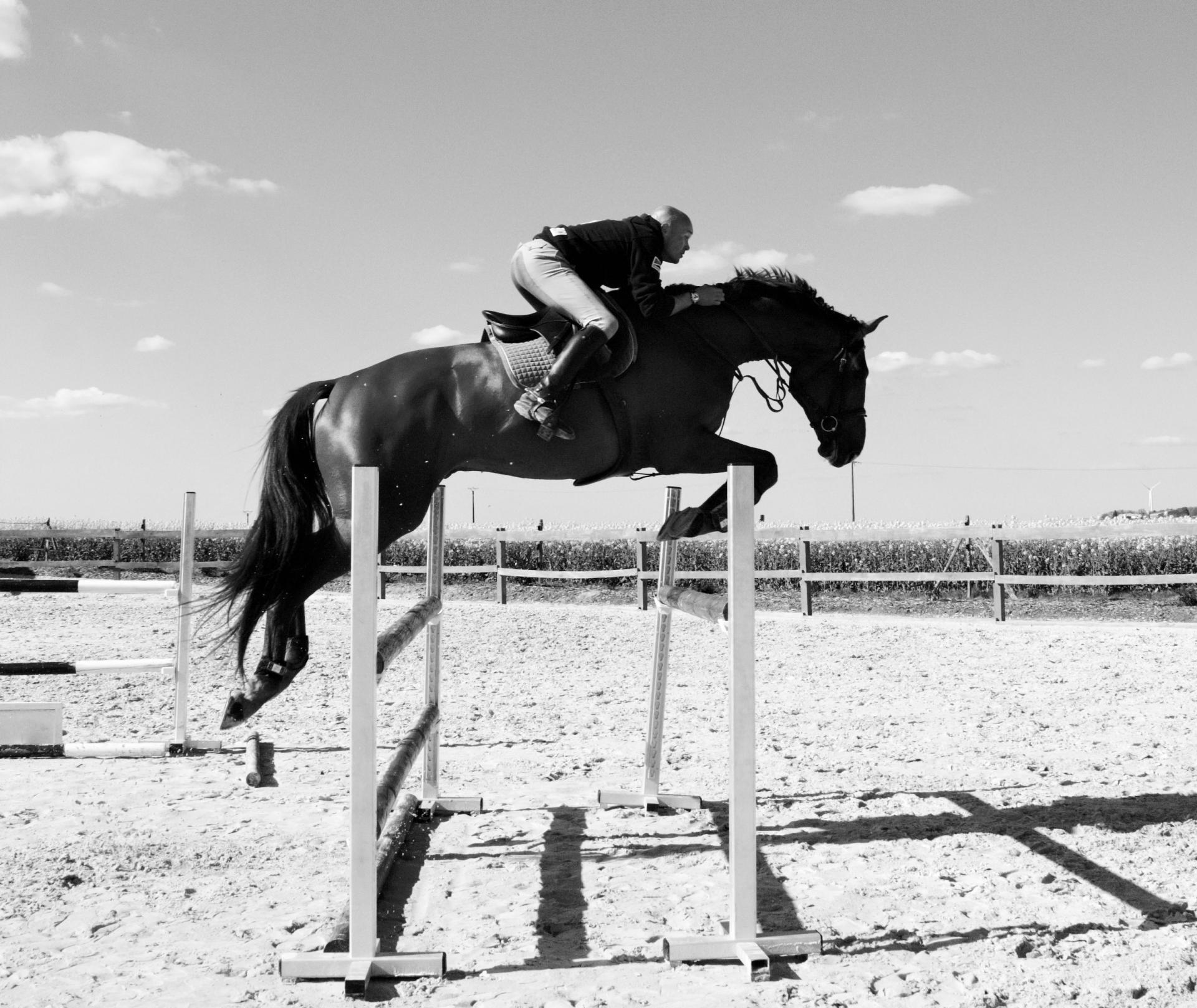 Travail de chevaux à l'obstacle