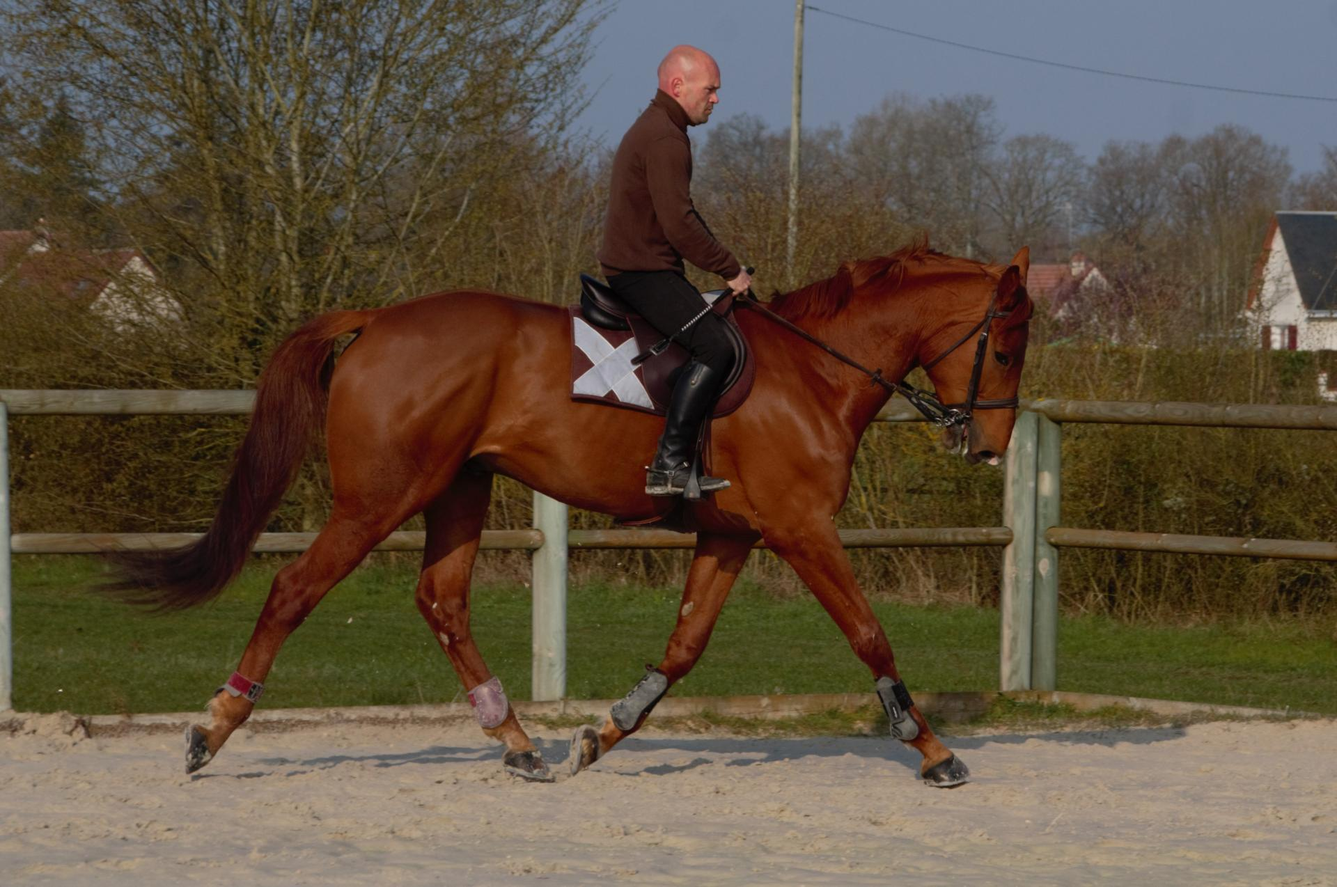Travail de chevaux en dressage à domicile