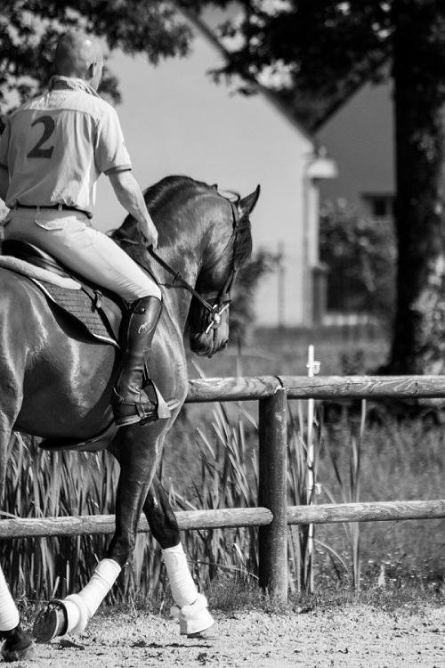 Travail de chevaux en dressage